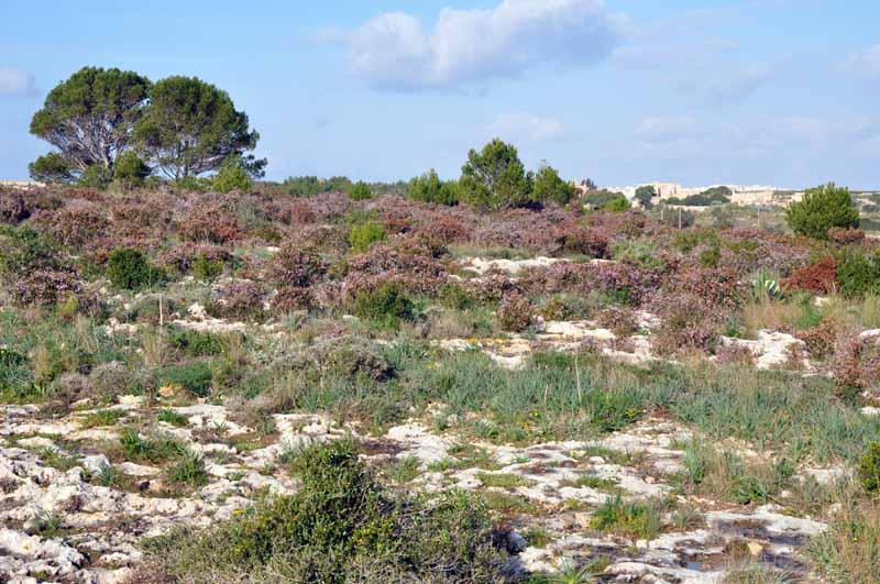 Mediterranean Ecosystem